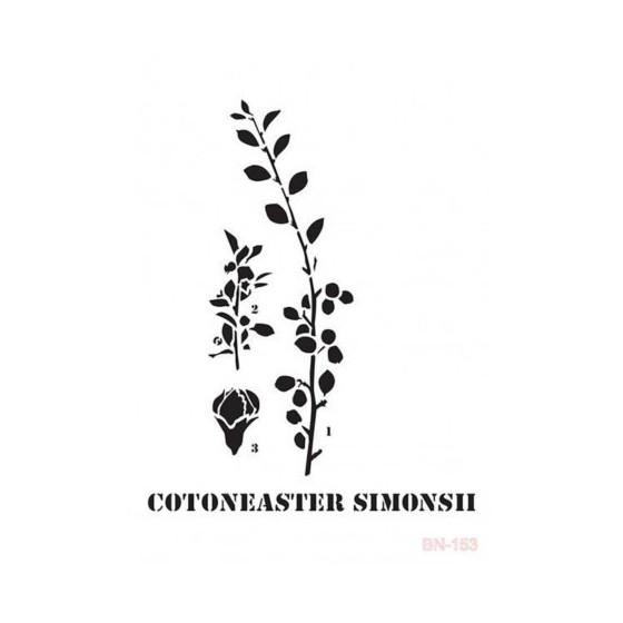 Stencil COTONEASTER BN153...